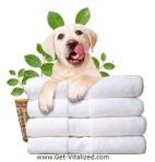 Get Clean Puppy