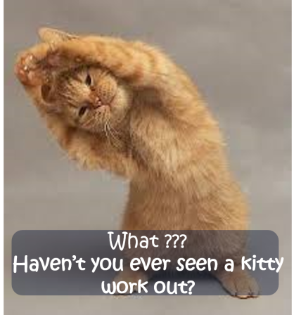 Workout Kitty!