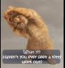 Workout Kitty!
